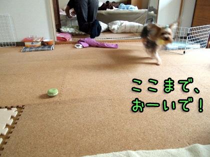 3_20090916204838.jpg
