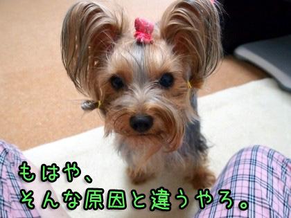 3_20090917185924.jpg