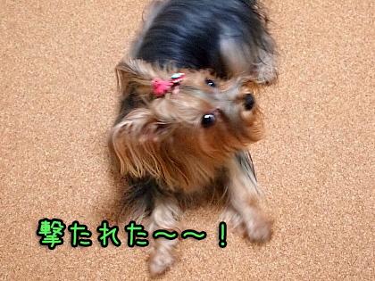 3_20090918194626.jpg