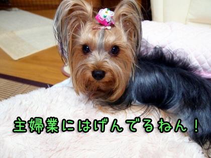 3_20090920201138.jpg