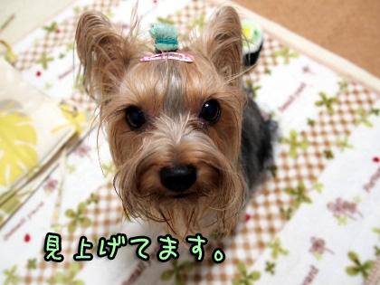 3_20091008192604.jpg