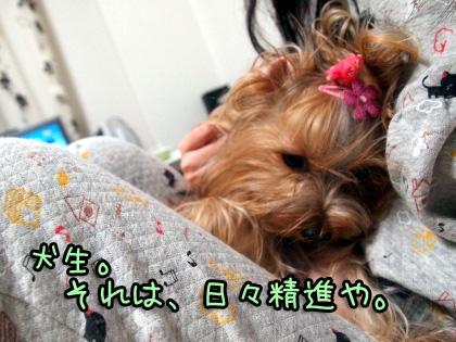 3_20091012191038.jpg