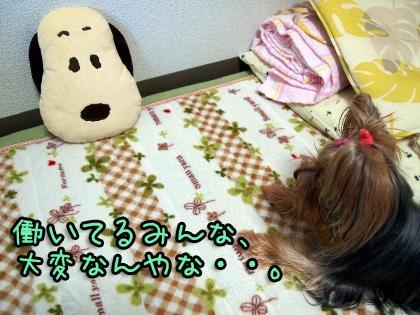 3_20091016195212.jpg