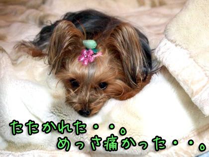 3_20091105192332.jpg