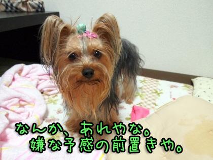 3_20091106200741.jpg