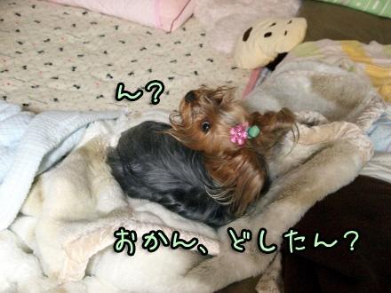 3_20091112190445.jpg