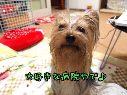 3_20091113201549.jpg