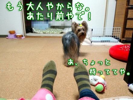 3_20091204185700.jpg