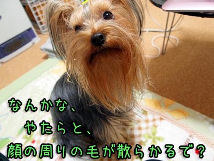 3_20091209190602.jpg