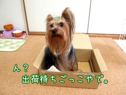 3_20091212193426.jpg