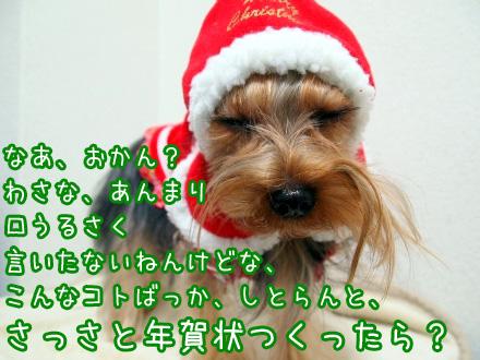 3_20091218193205.jpg