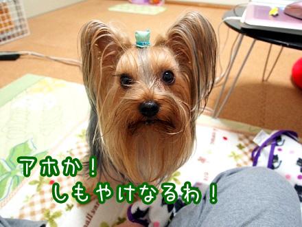 3_20091219192314.jpg