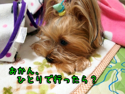3_20091221194531.jpg