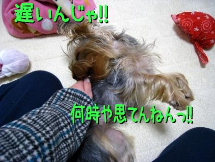 4_20090121124906.jpg