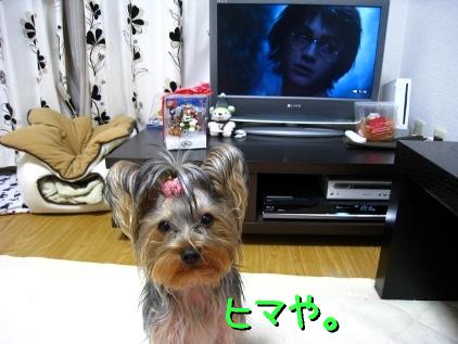 4_20090122201125.jpg