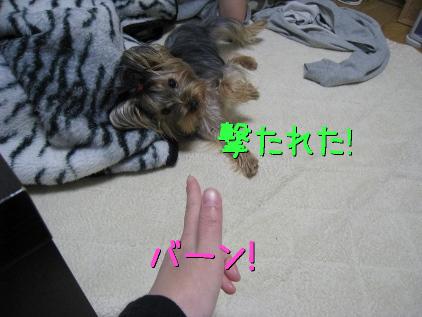 4_20090131194823.jpg