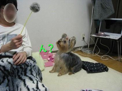 4_20090205153157.jpg