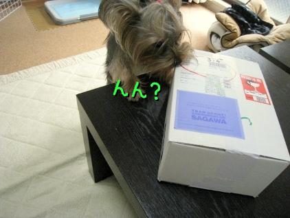 4_20090304142848.jpg