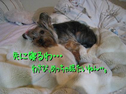4_20090313160805.jpg