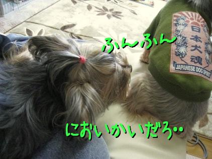 4_20090323175117.jpg