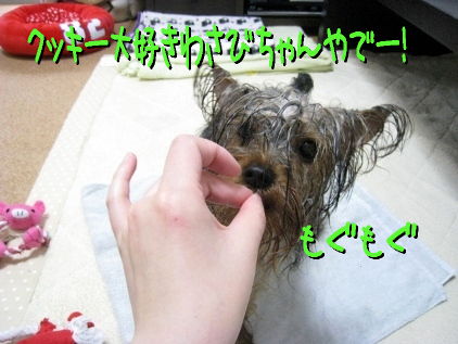 4_20090404190735.jpg