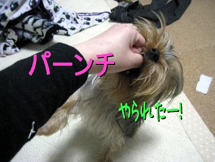 4_20090407202728.jpg