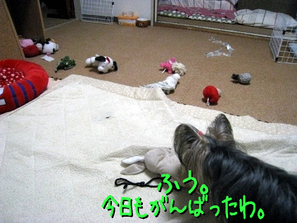 4_20090421182810.jpg
