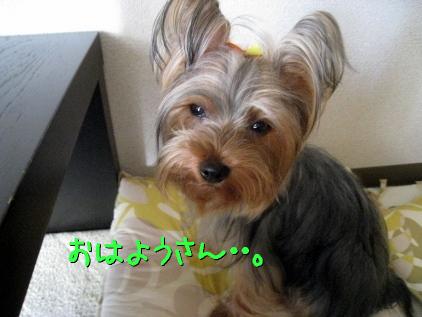 4_20090424182339.jpg