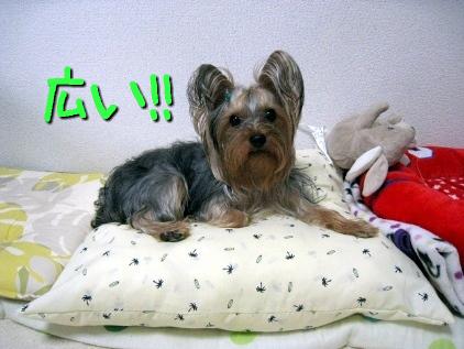 4_20090503181921.jpg