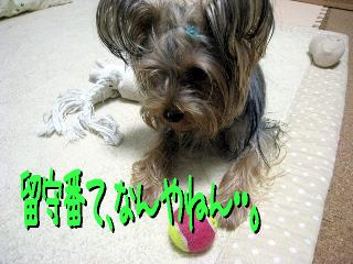 4_20090513150211.jpg