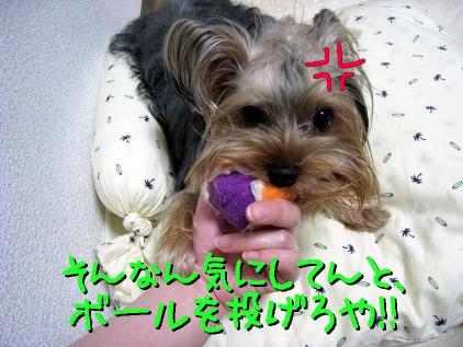 4_20090516211024.jpg
