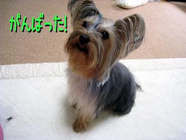 4_20090520173121.jpg