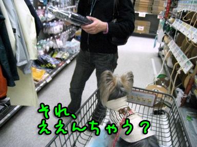 4_20090528162915.jpg