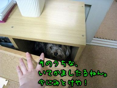 4_20090605202230.jpg