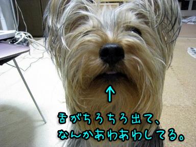 4_20090606191309.jpg