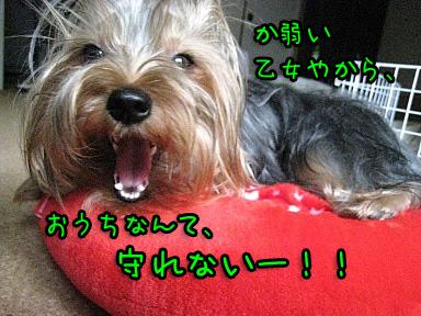 4_20090607144104.jpg