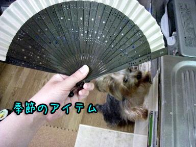 4_20090608191829.jpg