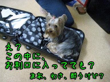 4_20090609194426.jpg