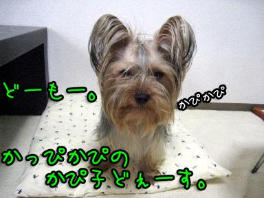 4_20090611193754.jpg