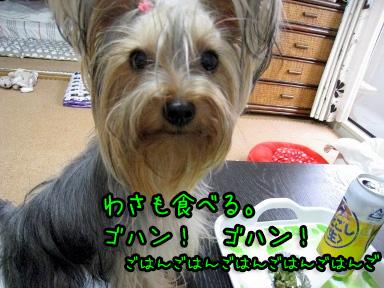 4_20090613183541.jpg