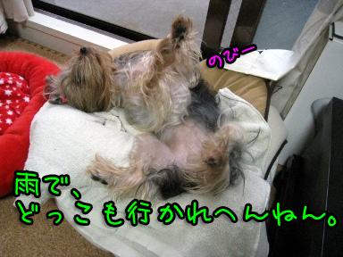 4_20090621150322.jpg