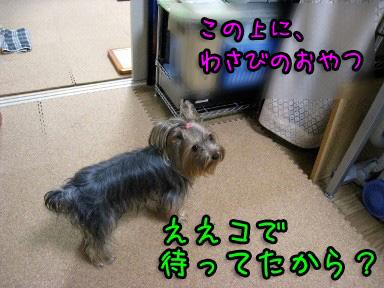 4_20090623194247.jpg