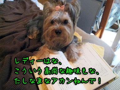 4_20090625202548.jpg