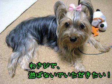 4_20090626195202.jpg