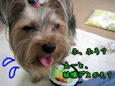 4_20090628122452.jpg