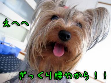 4_20090630144107.jpg