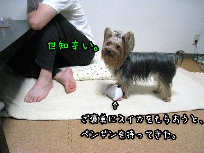 4_20090717193718.jpg