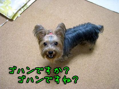 4_20090721195251.jpg