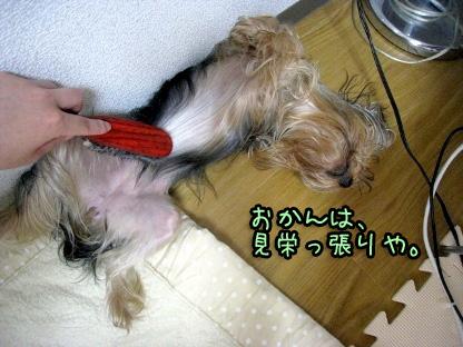 4_20090729111636.jpg