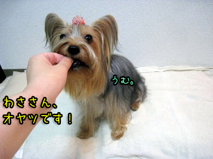 4_20090730173926.jpg